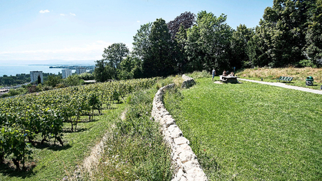 Un vignoble en plein Lausanne, sur la colline du Languedoc | Le vin quotidien | Scoop.it