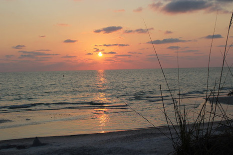 Here and There: Deseret Ranch and Indian Shores Beach! | clearwater | Scoop.it