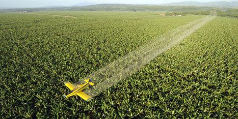 Deux condamnations au pénal en Argentine pour des pesticides ... - Le Monde   Abeilles, intoxications et informations   Scoop.it