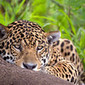 Roberto Fabbri Wildlife Photography   All about nature   Scoop.it