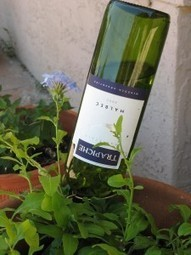 The next time you empty a bottle of wine . . . | Upcycled Garden Style | Scoop.it