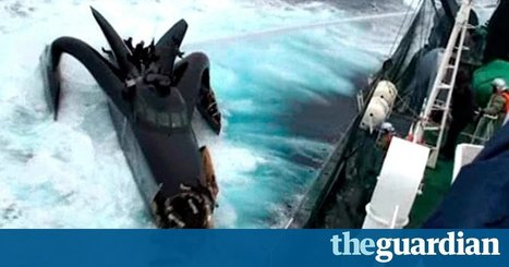 Sea Shepherd will keep harassing Japanese whaling boats despite US court ruling | Oceans and Wildlife | Scoop.it