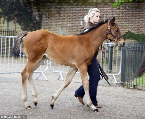 Meet Frank, the 3-month-old wonderfoal; offspring of the legendary horse, Frankel | Horse Racing News | Scoop.it