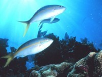 Miami teen dies while spear fishing off Key Largo | The Billy Pulpit | Scoop.it