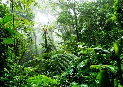 El héroe que creó una selva (solo) | CAMPING VALDERREDIBLE. | Scoop.it