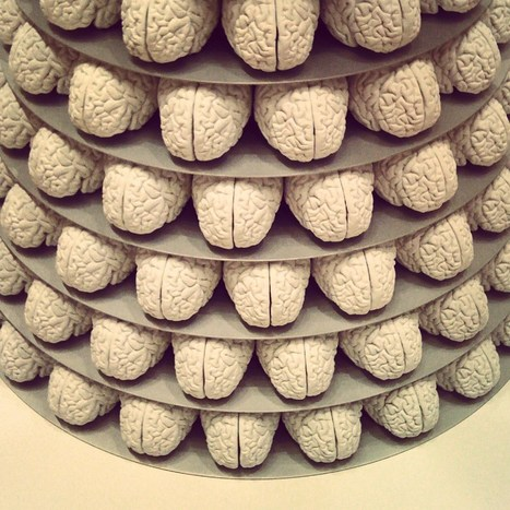 The Evolutionary Mystery of Left-Handedness and What It Reveals About How the Brain Works   Learning Together   Scoop.it