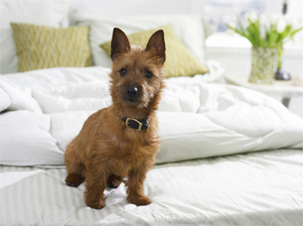 Pet Friendly Accommodation accommodation in Highlands | Pet Friendly Accommodation | Scoop.it