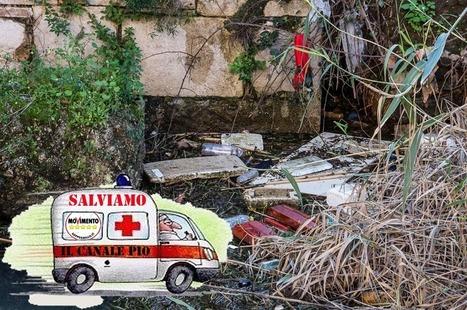 Movimento 5 Stelle richiama l'Amministrazione Comunale sulla responsabilità del degrado del canale Pio VI   Terracina Web News   Scoop.it