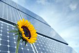 Sunflower-Inspired Solar Panels Track Sun Without Motors | Cool Future Technologies | Scoop.it