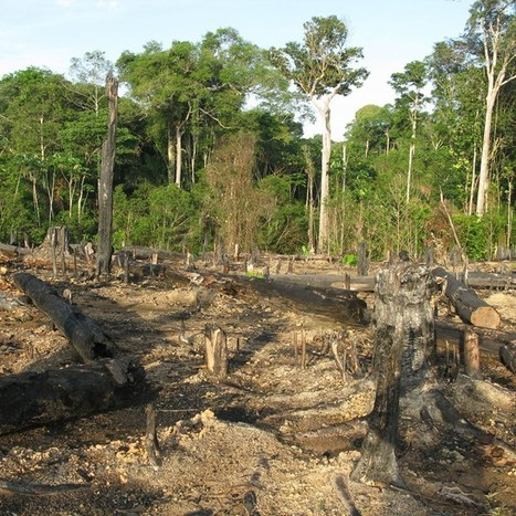Amazonian tribe use Google Earth to battle illegal logging (Wired UK) | Geoflorestas | Scoop.it