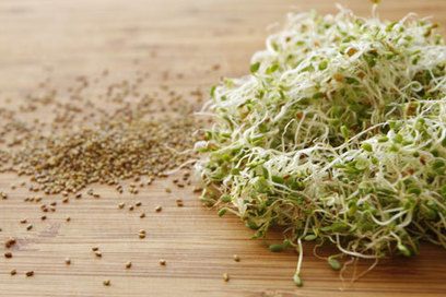 GUEST POST: Sprouting For Healthy Eating | iMobileHomes - Interior Gardens for Air Quality | Scoop.it