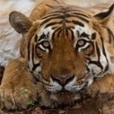 TRAFFIC Offers Military Training to Boost Wildlife Crime Investigation | Wildlife Trafficking: Who Does it? Allows it? | Scoop.it