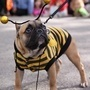 20 Spectacular Photos of Pets in Costume | Food for Pets | Scoop.it