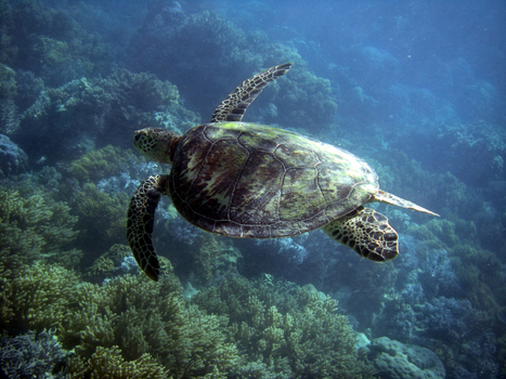 Plan B Updates - 120: Less Than 3 Percent of Oceans in Marine Parks Despite Recent Growth | EPI | Scuba Education | Scoop.it