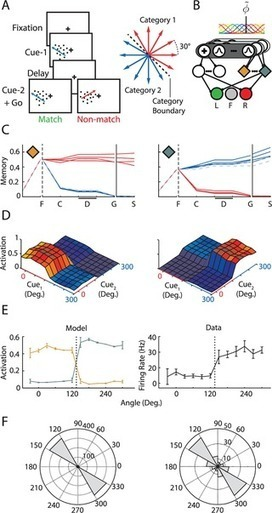 How Attention Can Create Synaptic Tags for the Learning of Working Memories in Sequential Tasks | Social Neuroscience Advances | Scoop.it