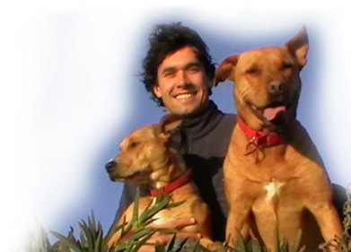 The Online Dog Trainer: The perfect way to learn how to train your dog!   cats & dogs!   Scoop.it