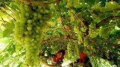 La Chine premier vignoble au monde d'ici 5 ans selon un chercheur du CNRS - France 3 Aquitaine | Le vin quotidien | Scoop.it
