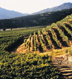 Chile's Wine Country Rebuilds After Its Own Earthquake | Wine business | Scoop.it