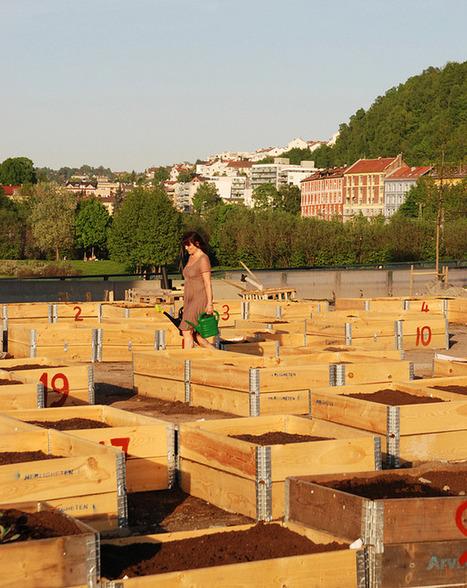 Herligheten, urban gardening in Oslo | ecosistema urbano | Lateral Thinking Knowledge | Scoop.it