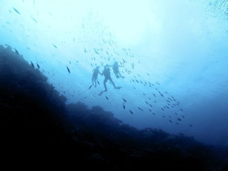 Why Scuba Diving is the Best Family Sport for a Round the World ... | DiverSync | Scoop.it