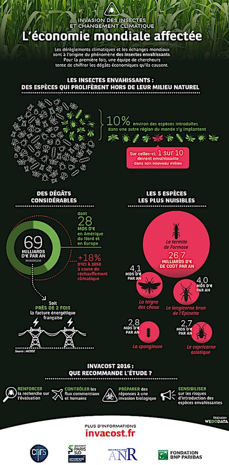 Les nuisances des insectes invasifs pour l'économie mondiale | Protection du bois | Scoop.it