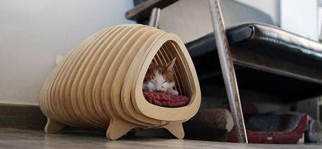 Fish Born Cat House | 16s3d: Bestioles, opinions & pétitions | Scoop.it
