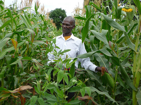 Varsities team up to avail farmer' latest climate change information - CoastWeek Kenya | BioFuels - Agriculture & Oil Trees | Scoop.it