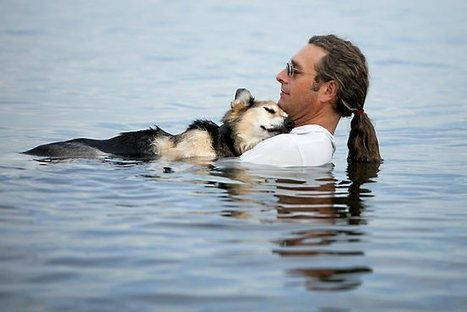 Schoep, the dog whose Internet photo touched millions, dies | Pet Health and Happiness | Scoop.it