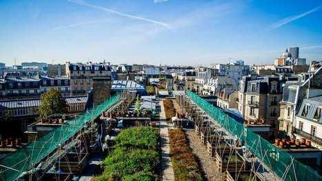 Quand les légumes repoussent en ville | Design de permaculture | Scoop.it