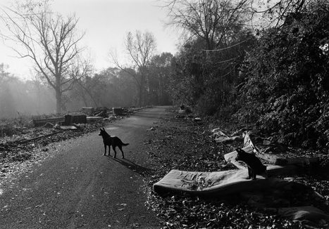 B: Q & A with Mark Steinmetz | Photography Now | Scoop.it
