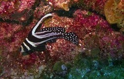 Want to Learn How to Dive? Think Central Americ... | Diving wonders of Belize | Scoop.it