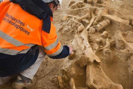 Un fossile complet de mammouth découvert en Seine-et-Marne   articles Préhistoire   Scoop.it