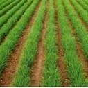 Hilo: MANUAL PREGUNTAS FRECUENTES EN LA PRODUCCIÓN ECOLÓGICA | ECOagricultor | Agroindustria Sostenible | Scoop.it
