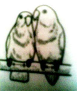 Harga Love Bird di Solo | Gracia Sewa Mobil Solo | Scoop.it