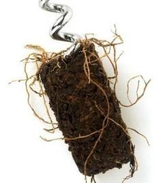 3 Raisons pour lesquelles vous devriez choisir du vin issu de l'agriculture biologique - | Les filières bio | Scoop.it