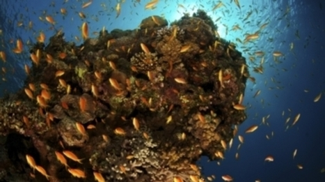Ocean's Oxygen Starts Running Low | Sustain Our Earth | Scoop.it