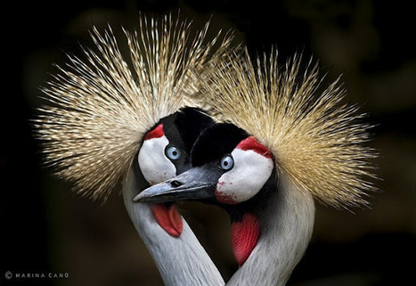 Welcome to Animal Cognizance: Wildlife Photography by Marina ... | Birds | Scoop.it