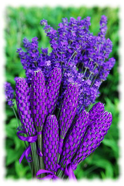 Lavender Wands   Gardening Life   Scoop.it