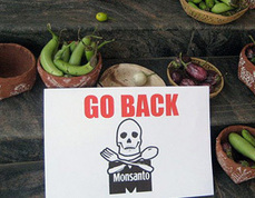 Obama aprueba ley que libera de responsabilidades legales a Monsanto | MOVUS | Scoop.it