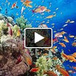 Fauna Marina de Chile | Ciencias | Scoop.it