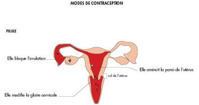 Les différentes méthodes contraceptives - Ministère des Affaires sociales et de la Santé - www.sante.gouv.fr | svt méthode contraceptives mars 2013 | Scoop.it