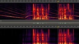 23 Reasons Why You Should Buy Adobe Audition CC ~ Pro Sound And Vocal Editing   Android App Development Guide   Scoop.it