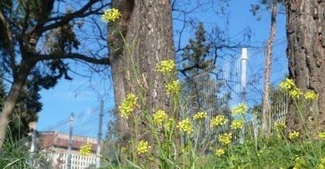 Los alérgicos sufrirán una de las peores primaveras de estos últimos años. | Contenidos SCLAIC | Scoop.it