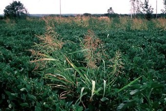 Update: New Pest & Disease Records (06 Feb 13) | Plant Pests - Global Travellers | Scoop.it