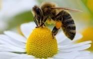 Des abeilles comme détecteurs de bombes - Zapside | Beewatch | Scoop.it
