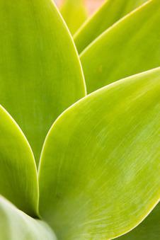 Des plantes pour dépolluer l'intérieur de nos maisons!   Des 4 coins du monde   Scoop.it