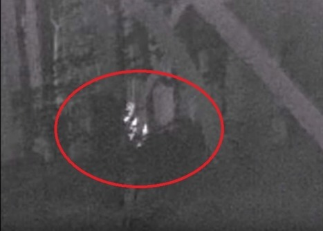New Skunk Ape sighting captured on thermal video | Cryptic Content: Cryptozoology | Scoop.it