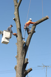 7 Signs You Should Remove Your Tree Urgently   Aspen Tree Service   Scoop.it