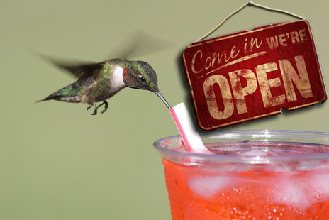 SEO in 2014: What Does Google Hummingbird Mean for Small Businesses | Integrated Marketing Communications | Scoop.it