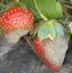 Update: Plant Health News (18 Jan 12) | Plant health | Scoop.it